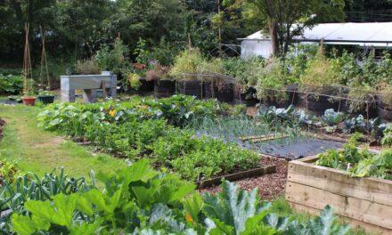 Hoe groentetuin aanplanten